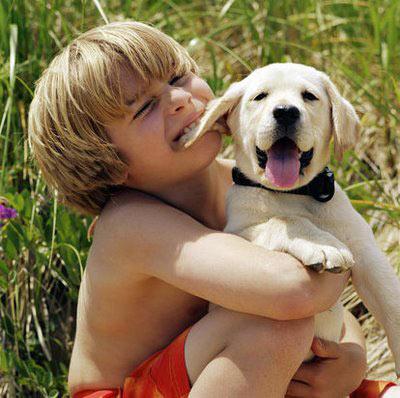 Cómo Adoptar un Perro