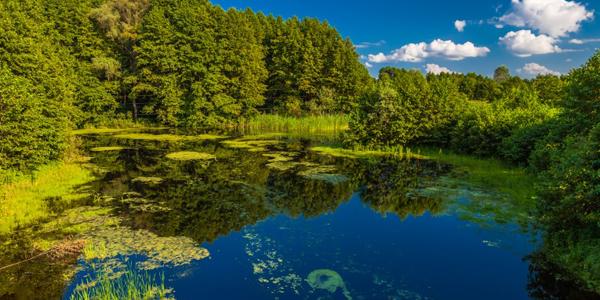 Consejos para Proteger el Medio Ambiente y los Recursos Naturales