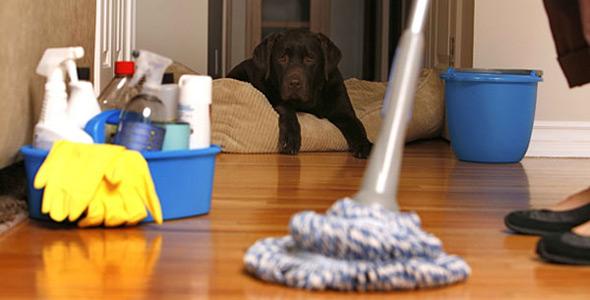 Entrenar-a-un-Perro