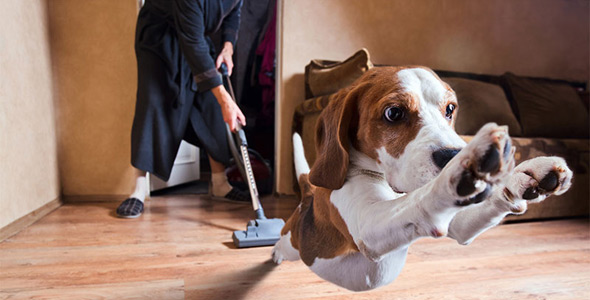 Limpiar-una-Casa-Mascotas