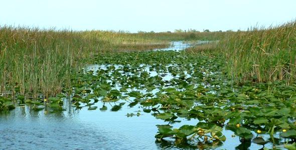 Parque-Nacional-de-los-Everglades